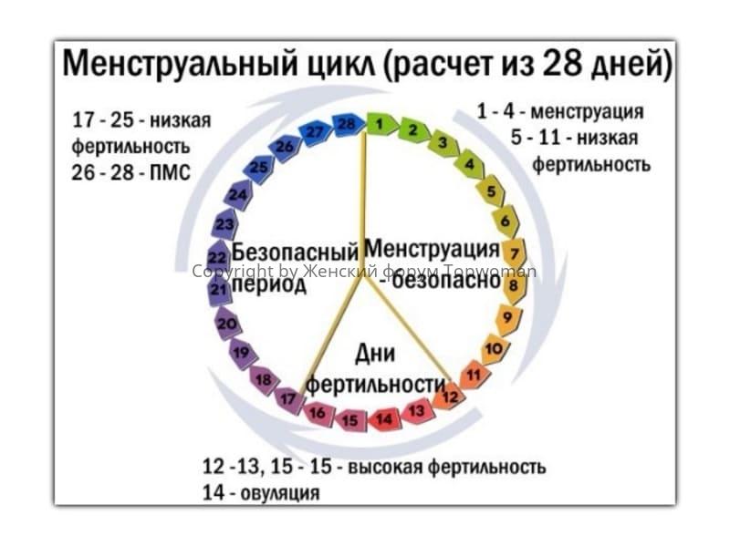 Окно фертильности в женском 28-дневном календаре