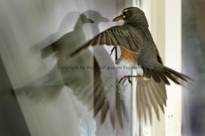 Что означает, если птица ударилась в окно