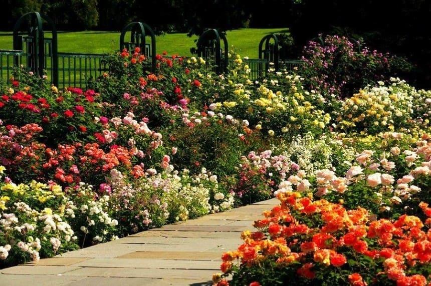 Где посадить розы на участке
