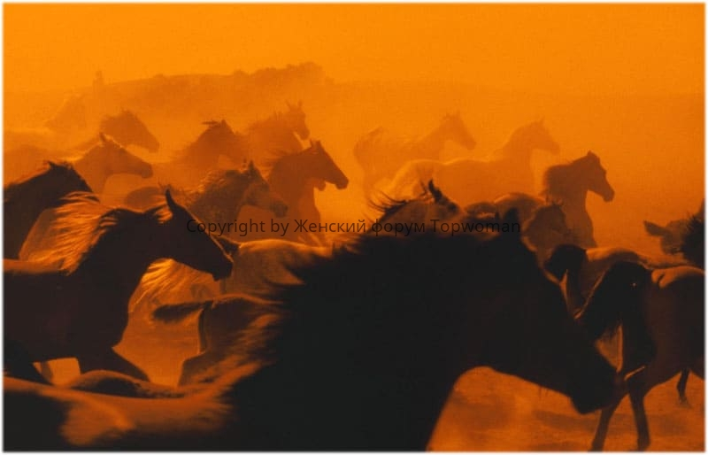 Видеть во сне табун чёрных лошадей