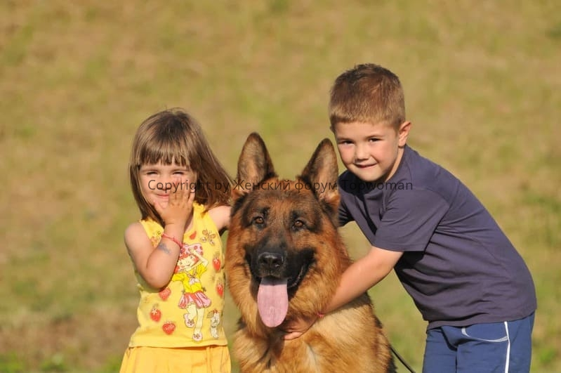 Как собака влияет на развитие ребёнка