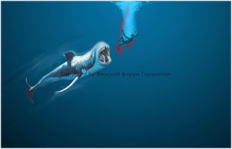 нападение кита