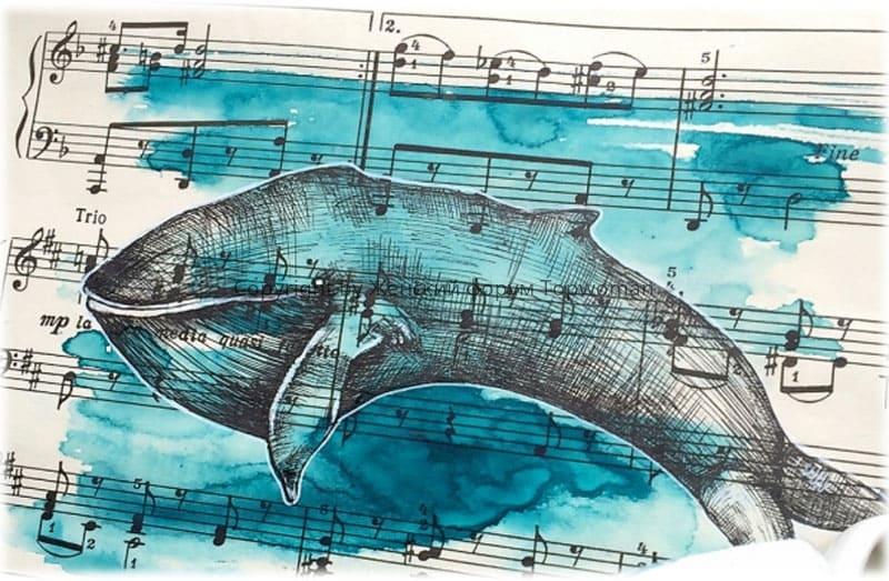 кит поёт