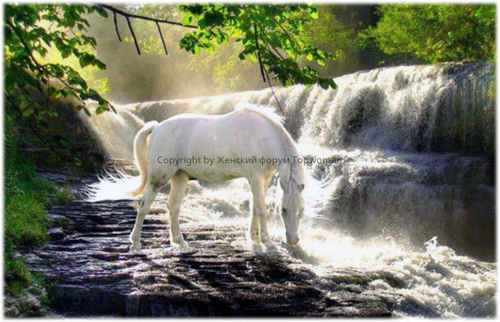 Снится, как переезжаете на белой лошади ручей