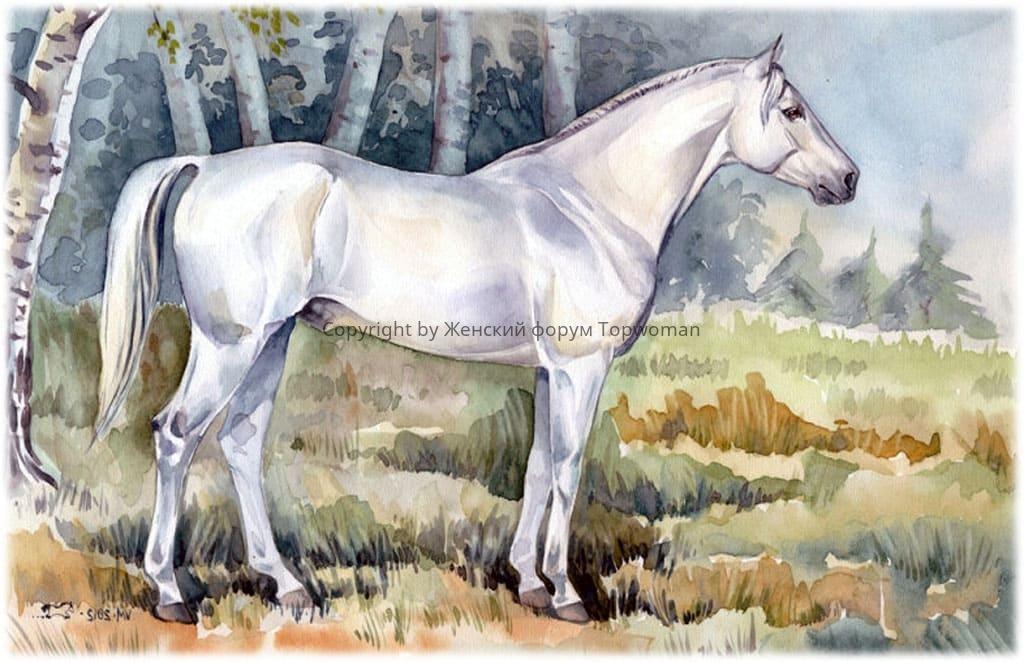 Снится спокойная белая лошадь