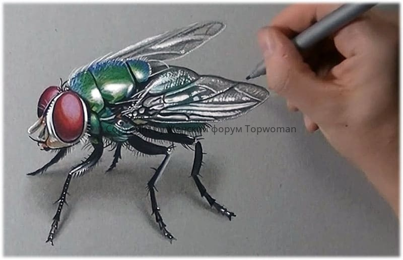 Увидели зелёную муху — к болезни