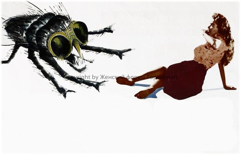 К чему снятся мухи во сне женщине