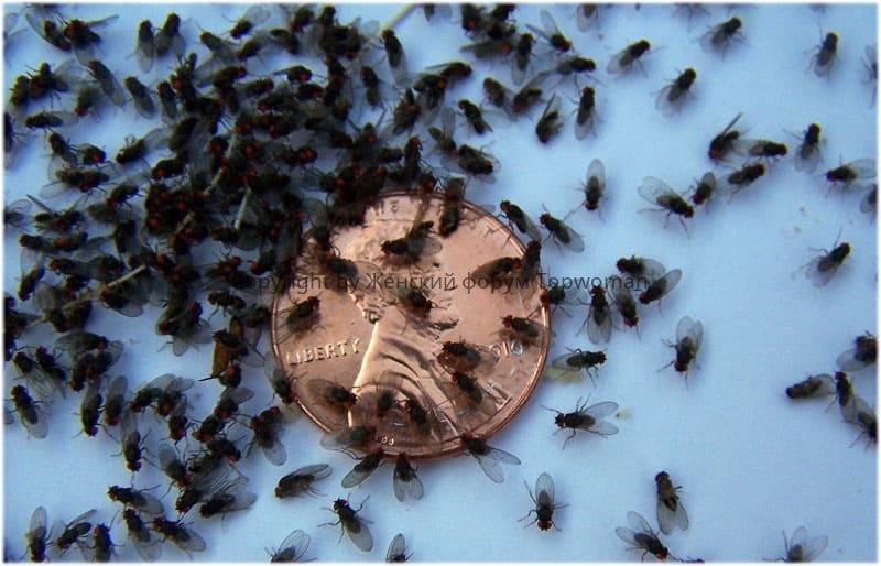 К чему снятся мухи в большом количестве
