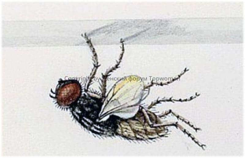 К чему снятся мухи на потолке