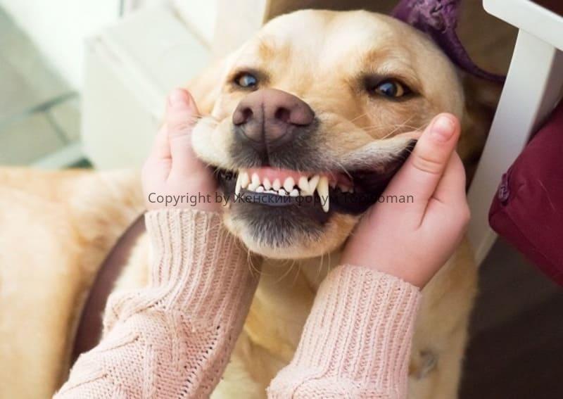 Как определить возраст собаки по зубам