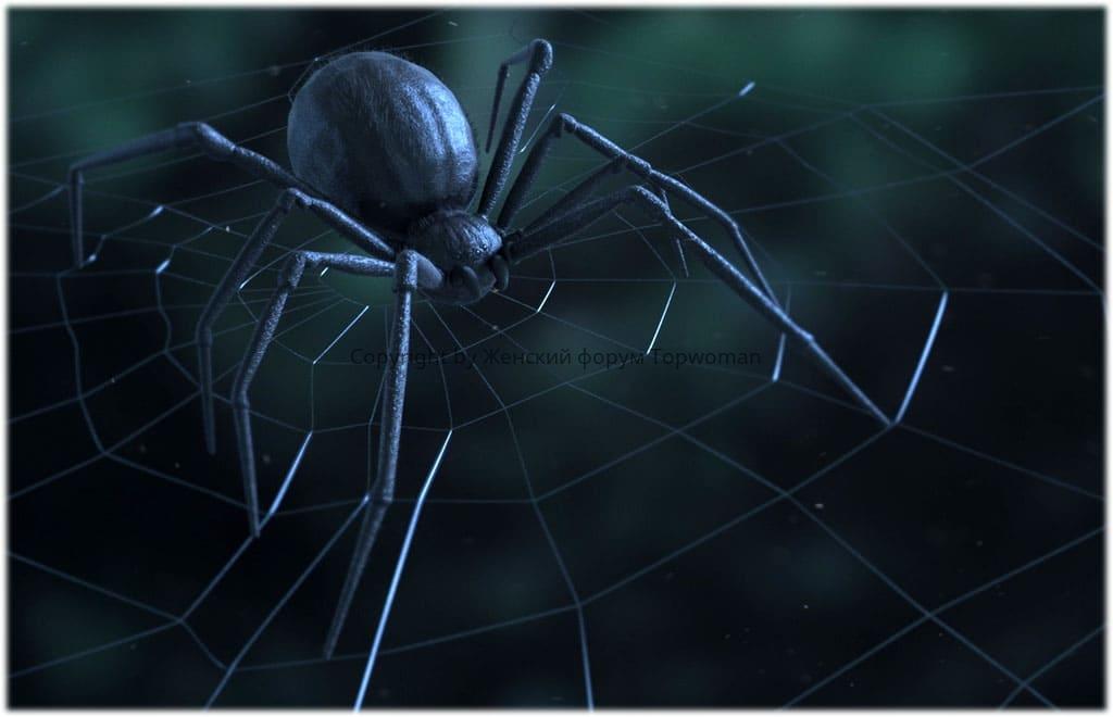 К чему снится большой чёрный паук женщине?