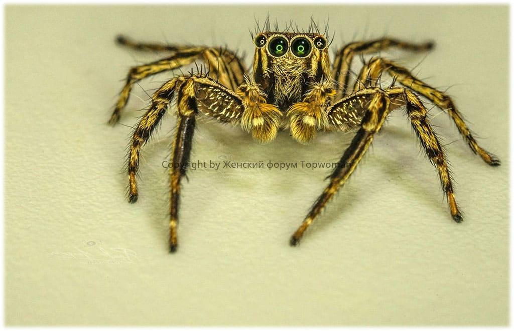 К чему снятся жёлтые пауки женщине?