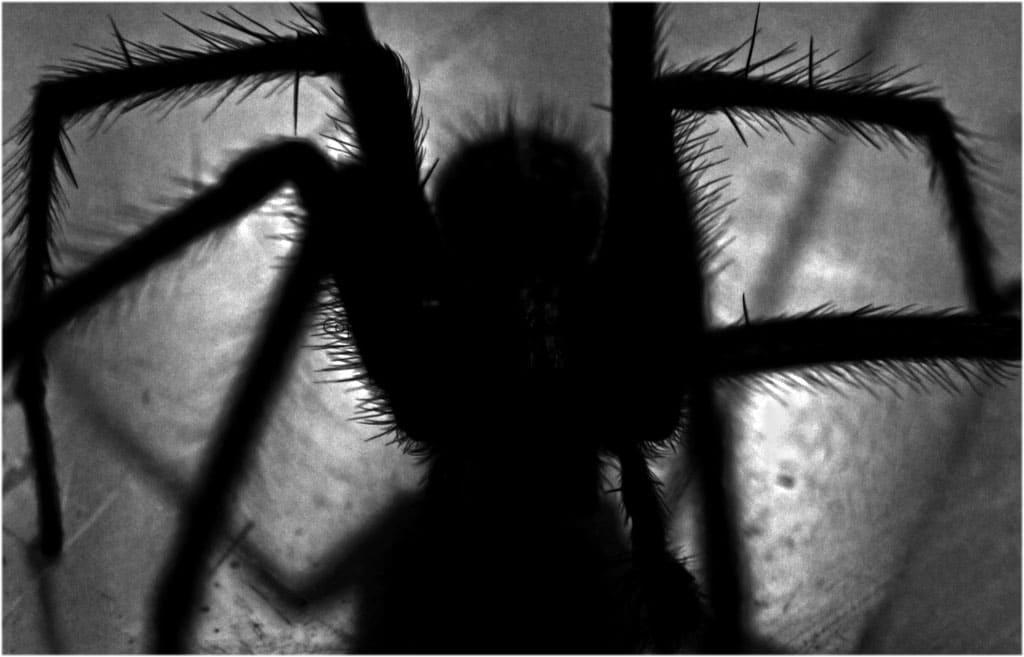 К чему снятся пауки во сне женщине?