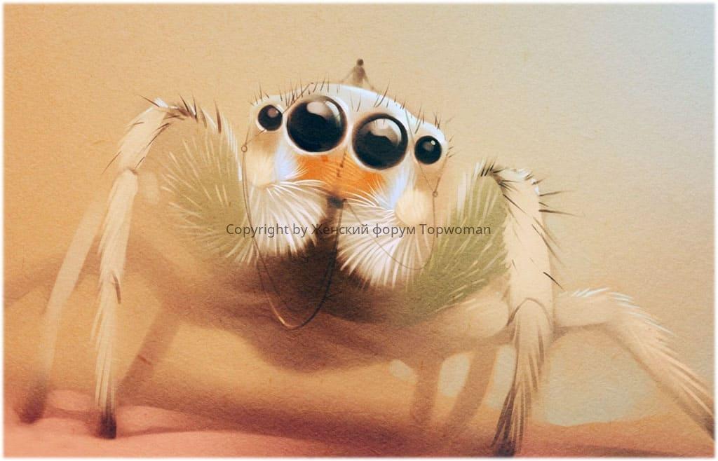 К чему снится белый паук женщине?