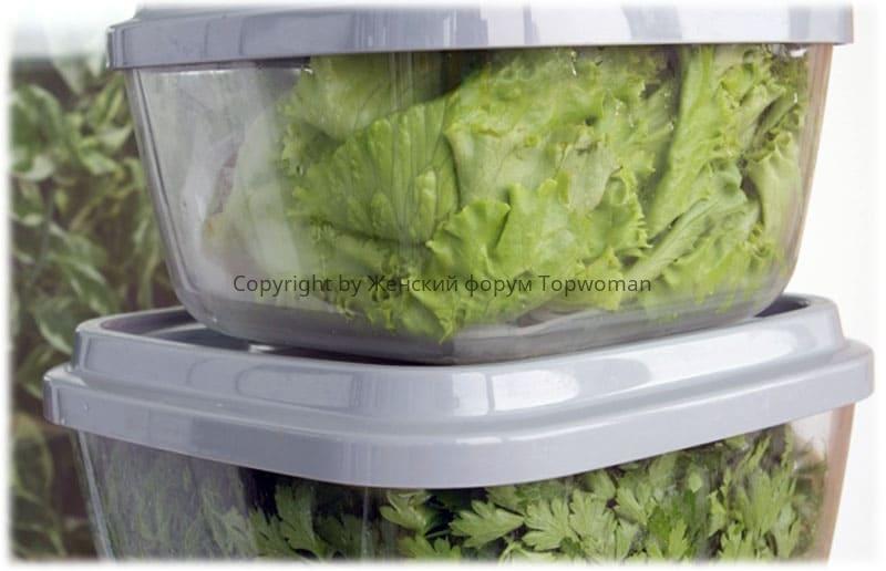 Сохранить зелень поможет пластиковый контейнер