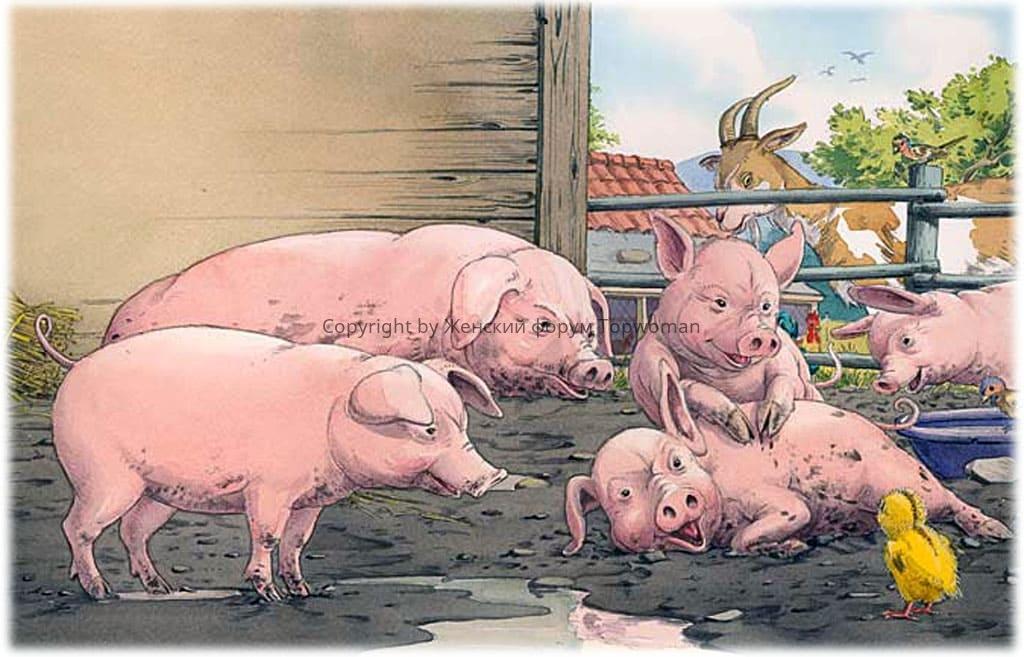 К чему снится много свиней