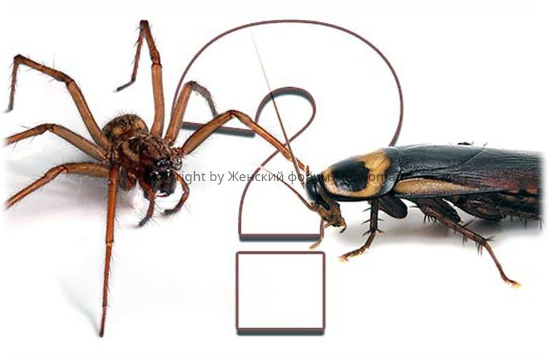 Одновременно увидели чёрных тараканов с пауками