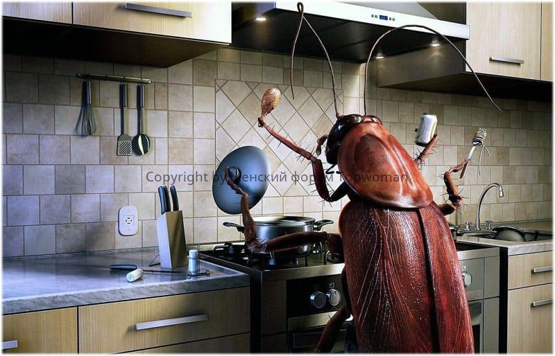 Снится таракан гигантских размеров