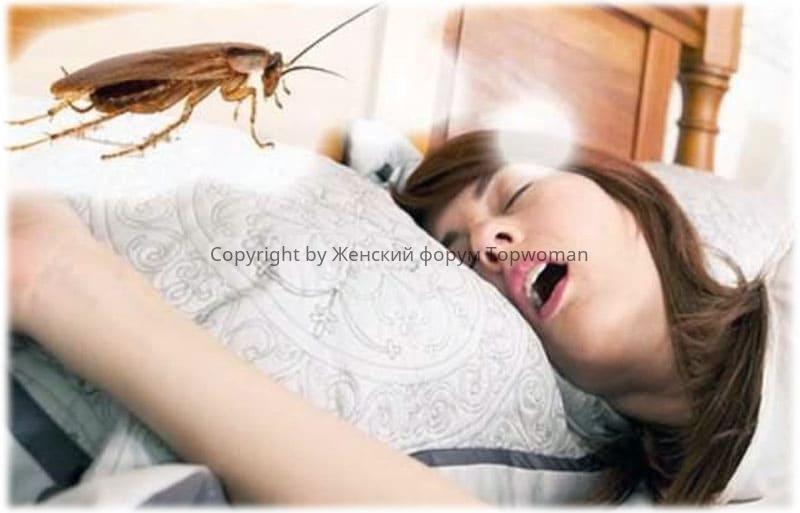 К чему снятся тараканы во сне женщине
