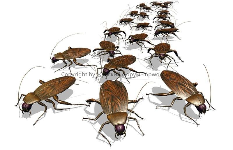 Если приснилось много тараканов