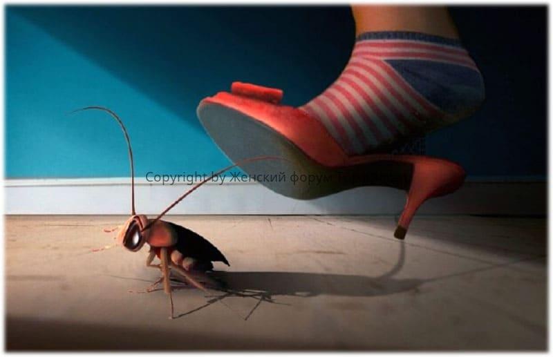 Снится, как вы догоняете таракана